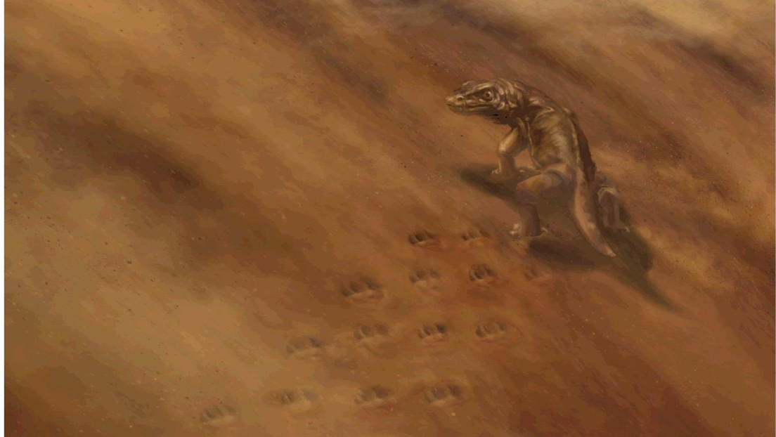 Descubren huellas de animales de hace 313 millones de años, tras el colapso de un acantilado del Gran Cañón (FOTOS)