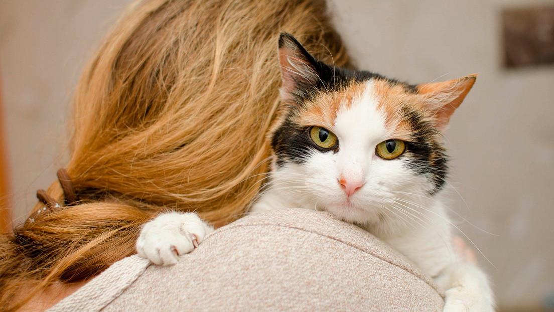"""Científicos descubren que un medicamento para gatos puede combatir el coronavirus en humanos y explican por qué """"no es sorprendente"""""""