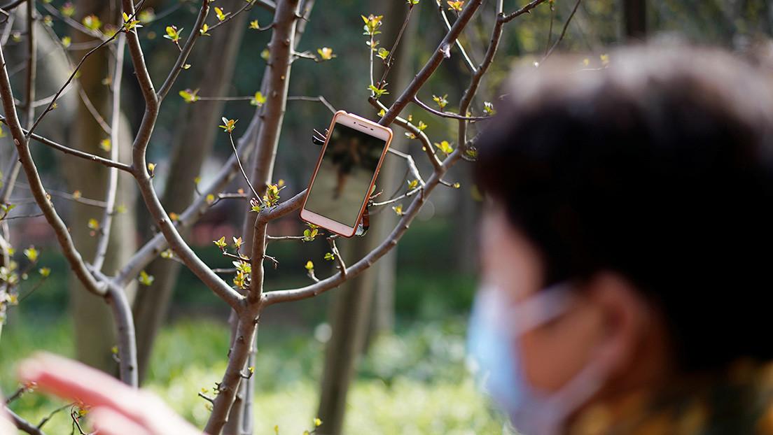 Repartidores de Amazon cuelgan sus celulares en los árboles para obtener más pedidos