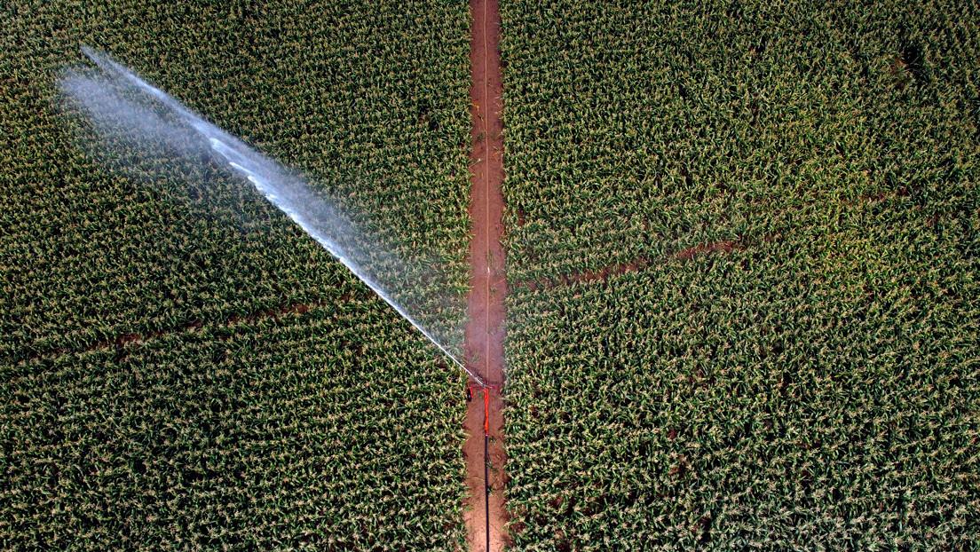 Según un estudio, cada año se roba hasta la mitad del suministro de agua del mundo