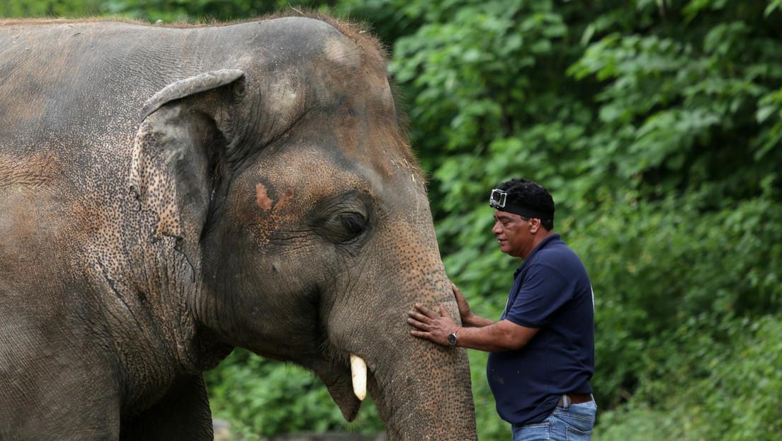 El 'elefante más triste del mundo' recibe el permiso médico para abandonar el zoológico de Pakistán