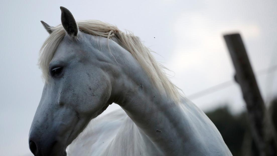Un extraño caso de mutilaciones de caballos en serie mantiene en vilo a Francia