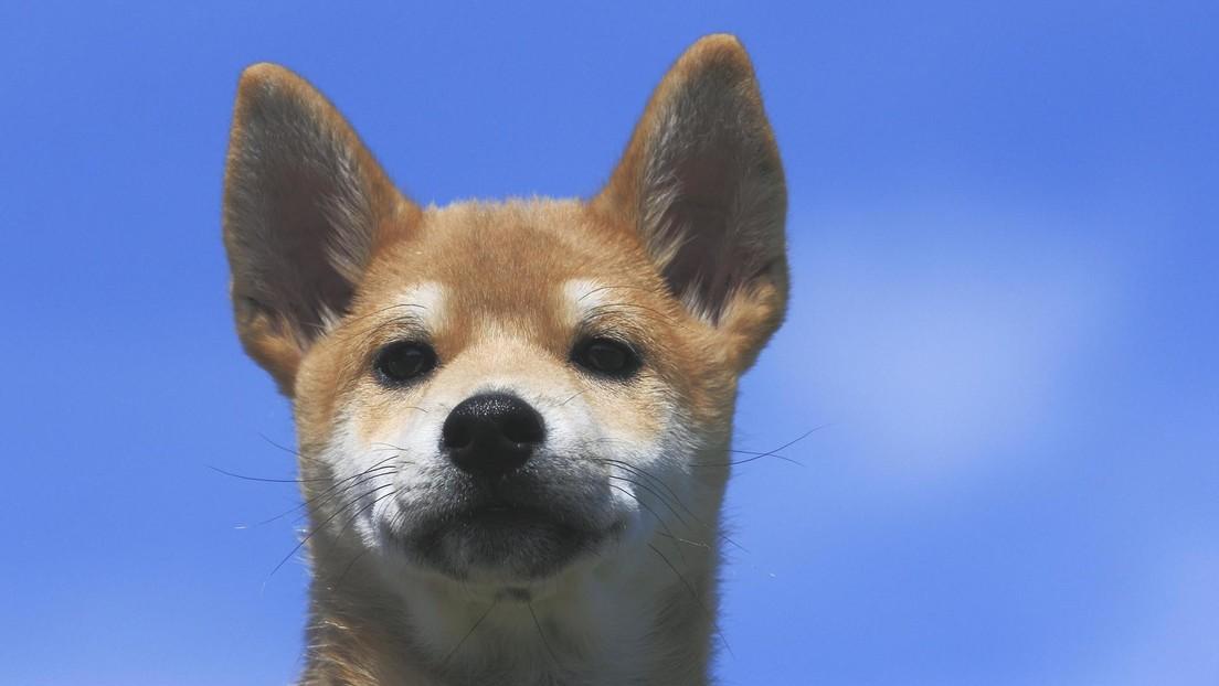 FOTOS: Hina, el perrito que adora 'estropear' las fotos de su dueña con sus payasadas