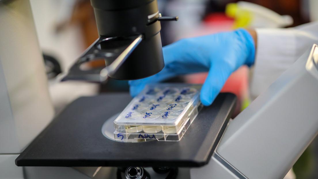 Investigadores rusos no registran mutaciones significativas del coronavirus tras estudiar 422 muestras
