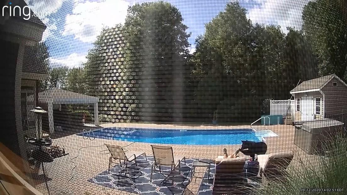 VIDEO: Un oso despierta a un hombre dormido junto a la piscina de su casa
