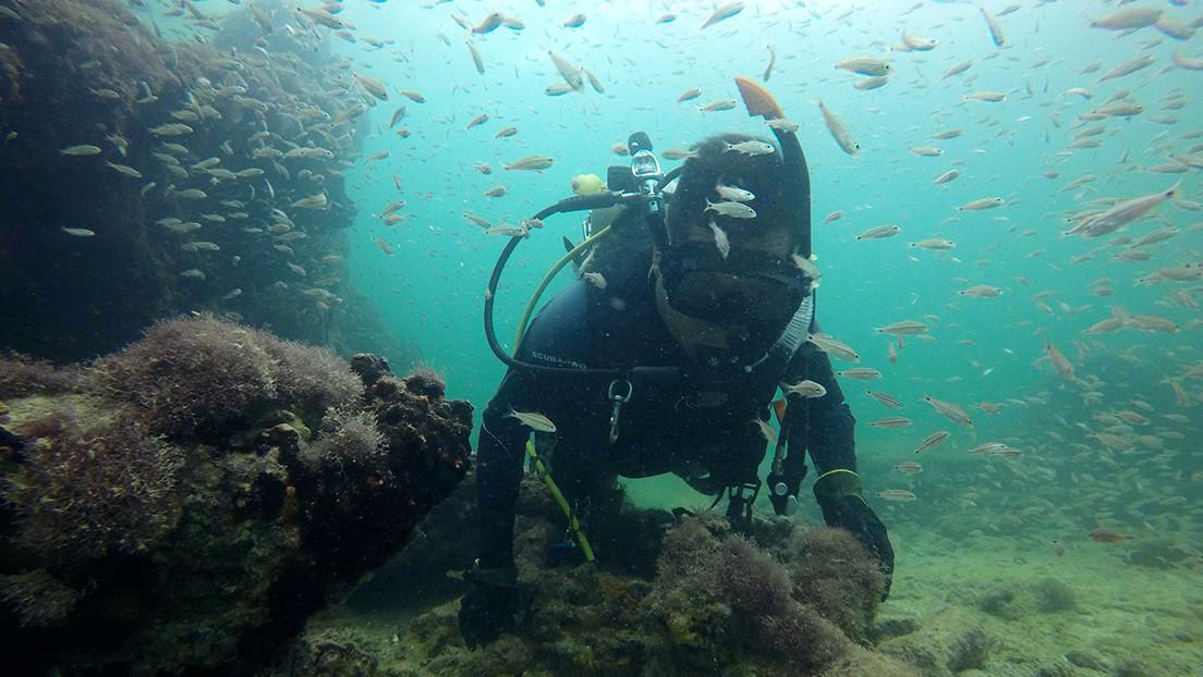 Identifican los restos del primer barco utilizado para el tráfico de esclavos mayas (VIDEO)