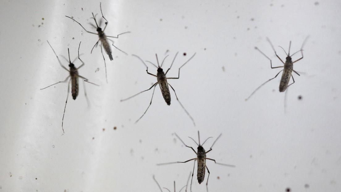 Ya son cinco los fallecidos por el virus del Nilo en España y hay 29 casos confirmados