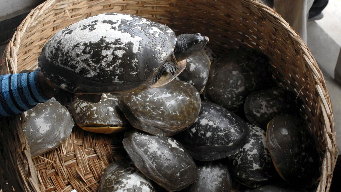 Diplomático australiano se ve obligado a disculparse tras comer un plato de tortuga en peligro de extinción en Camboya