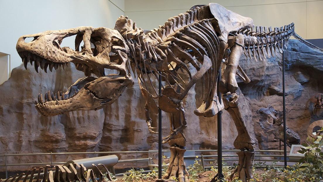 La subasta de uno de los esqueletos de T-Rex más completos del mundo puede romper el techo del mercado de fósiles