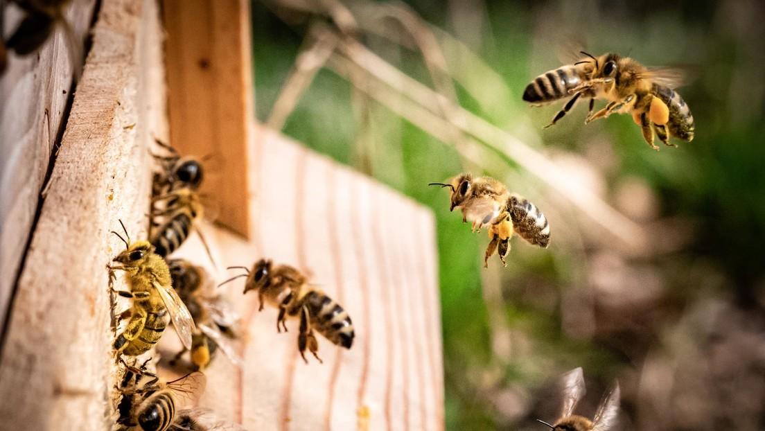 """Científicos advierten que la radiación de los celulares puede ser una de las causas de la """"dramática disminución de insectos"""""""