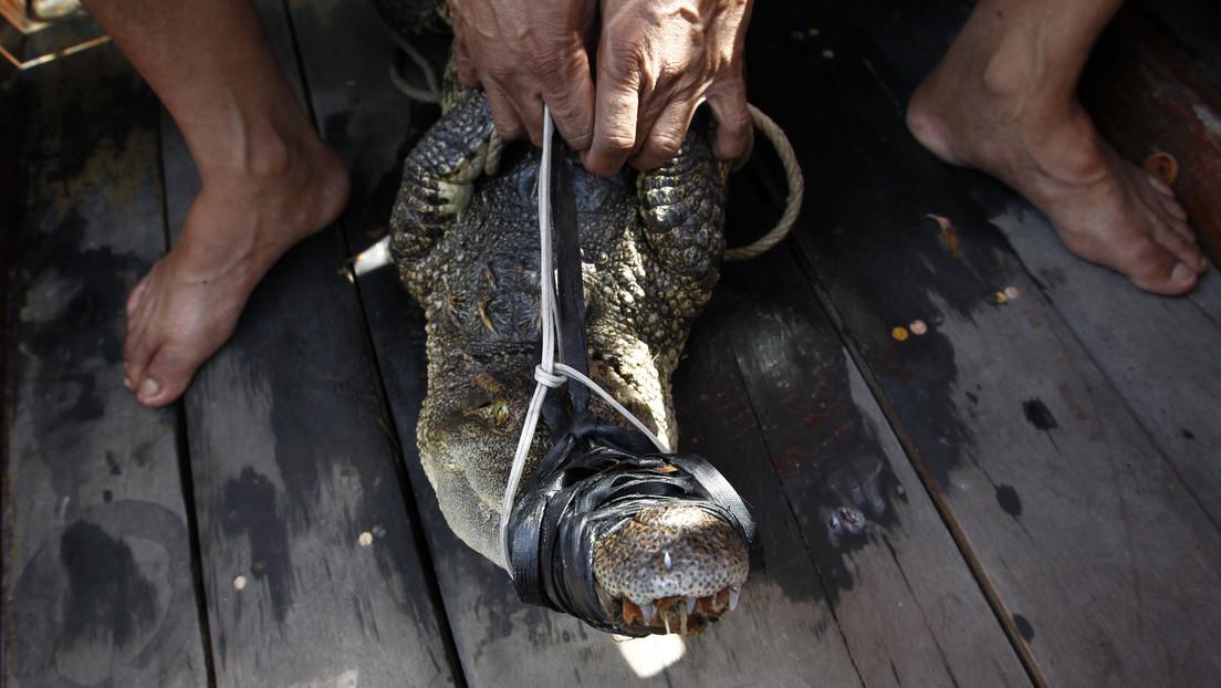 Tailandia: Capturan y cocinan a un cocodrilo en venganza por su ataque a un pescador