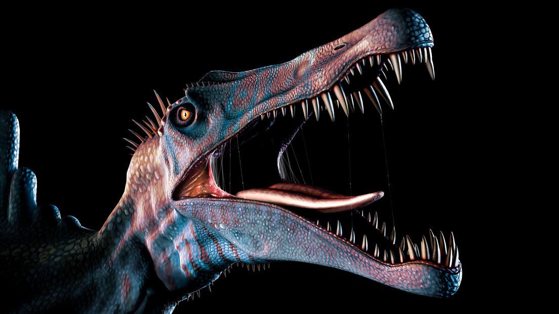 Estudio de unos 1.200 dientes fosilizados confirma que el enorme espinosaurio de 'Parque Jurásico' fue un depredador acuático