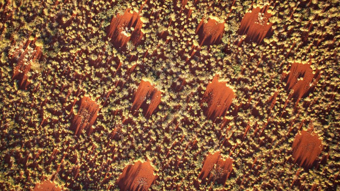 Explican los misteriosos círculos de hadas de los desiertos con ayuda de un modelo matemático de Alan Turing