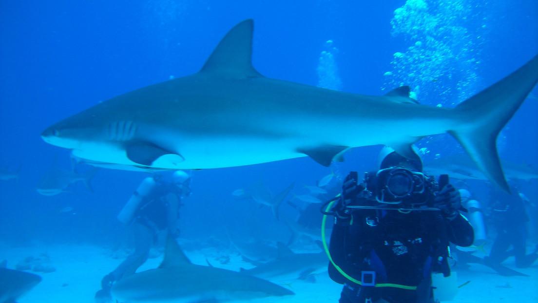 VIDEO: Una buceadora da de comer de su mano a tiburones tigre