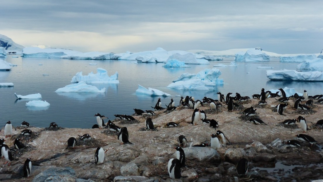 El deshielo en la Antártida deja al descubierto un intrigante cementerio de pingüinos