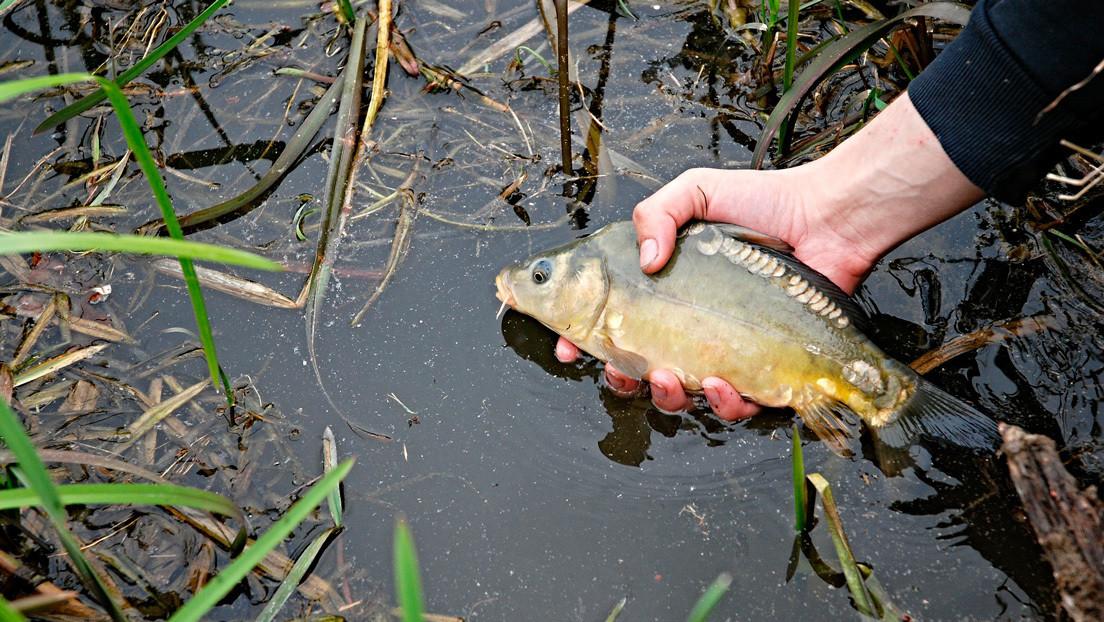 VIDEO: Se resbala, cae a un lago y captura al instante un pez con la mano