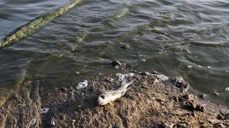 Hunderte von toten Fischen tauchen an den Ufern des Yellowstone River in den USA auf