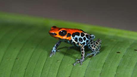 La fauna ha disminuido 94 % en las regiones tropicales de América Latina y el Caribe en los últimos 50 años