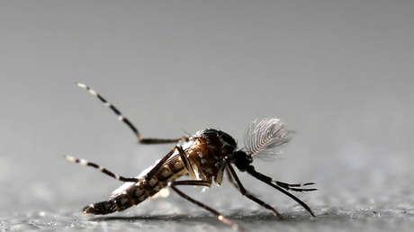 """Plaga de mosquitos mata decenas de cabezas de ganado tras """"explotar"""" su población por el paso del huracán Laura en EE.UU."""