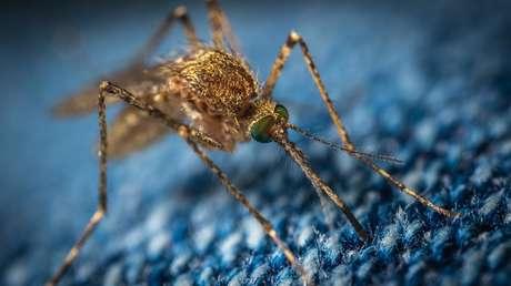 """""""Amenaza en curso"""": detectan en Michigan el primer caso sospechoso de infección humana por un virus mortal transmitido por mosquitos"""