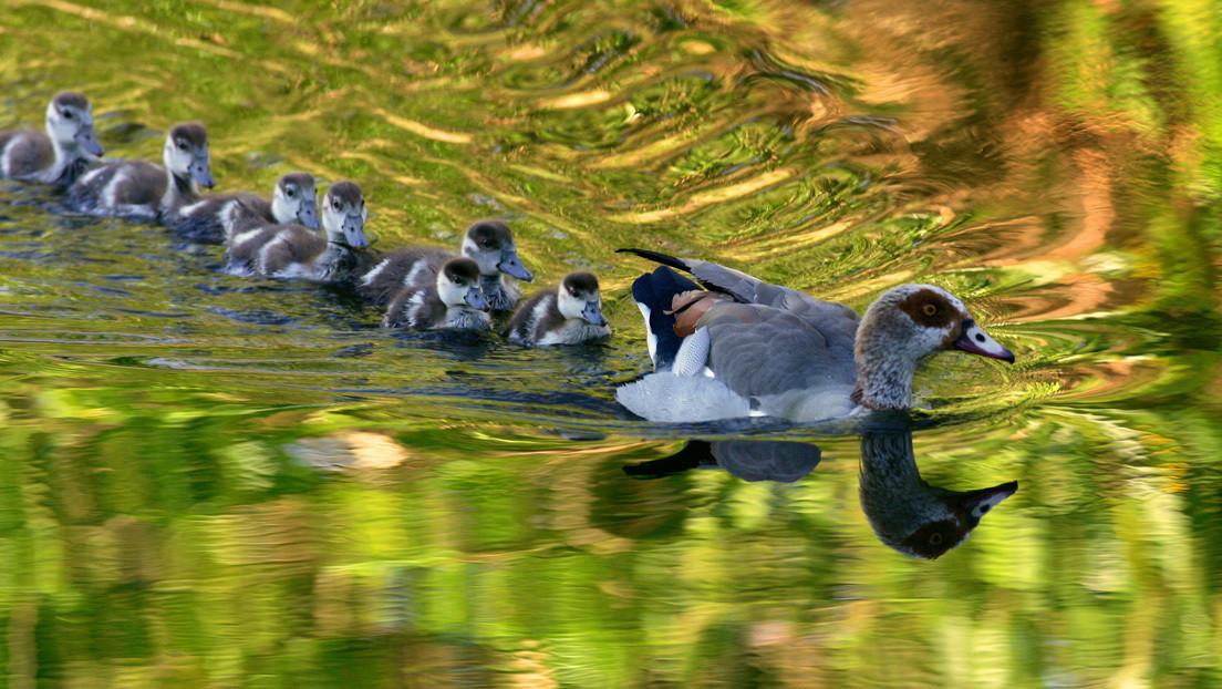 El número de especies exóticas invasoras aumentará un 36 % en 2050