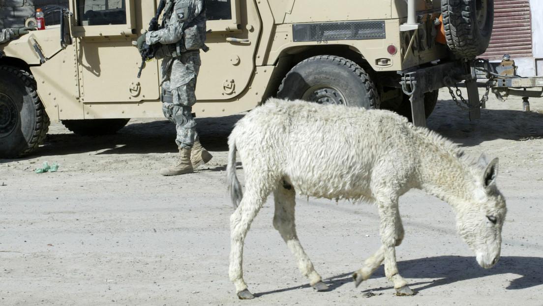 El Estado Islámico usa un burro para atentar contra un gobernador en Nigeria