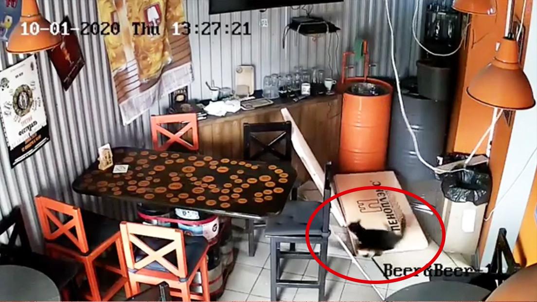 Un gato callejero provoca destrozos en una cervecería rusa tras caer por el techo (VIDEO)