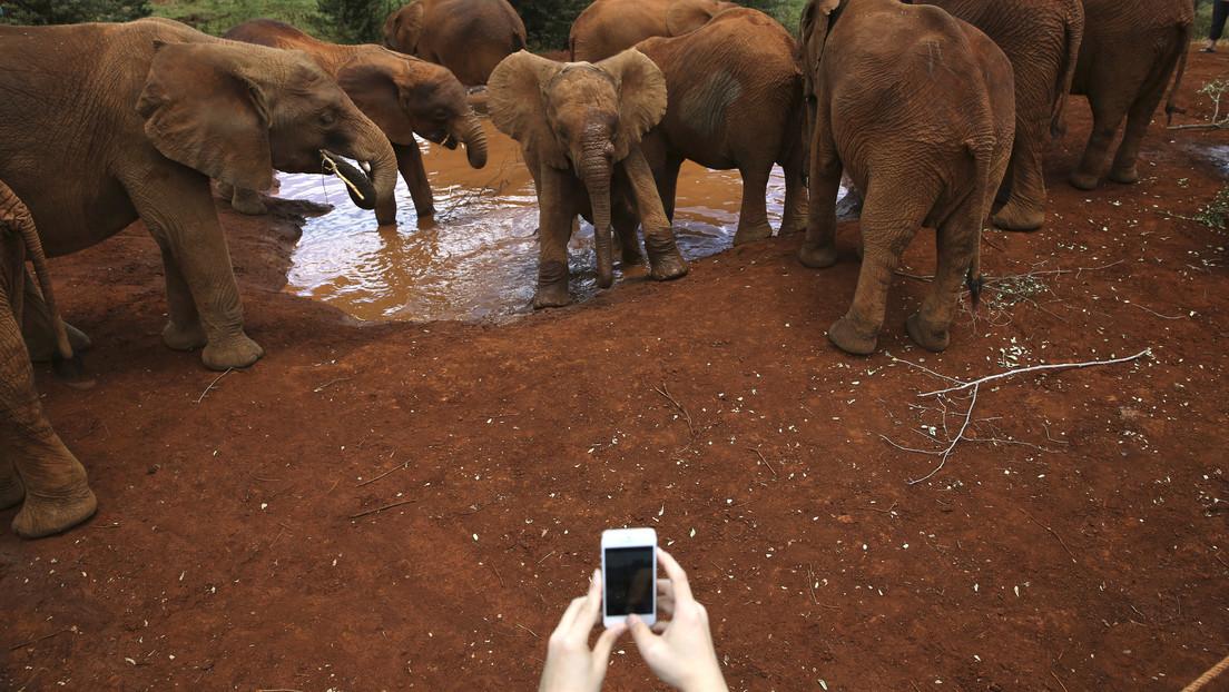 VIDEO: Elefante encuentra un iPhone con la cámara encendida y lo pone a prueba