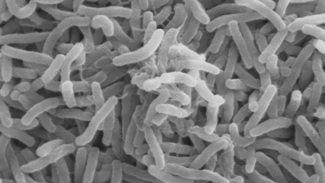 Descifran el genoma de la bacteria que provocó el último brote de cólera en Argentina