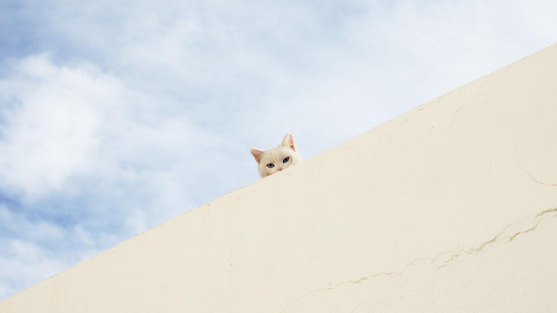 MEMES: La foto de un gato 'divino' acomodado entre nubes revienta la Red