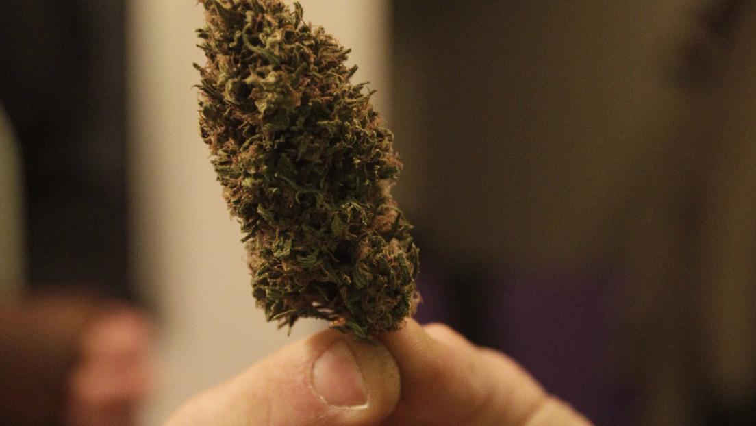 El componente psicoactivo de la marihuana podría prevenir y tratar las complicaciones mortales del covid-19
