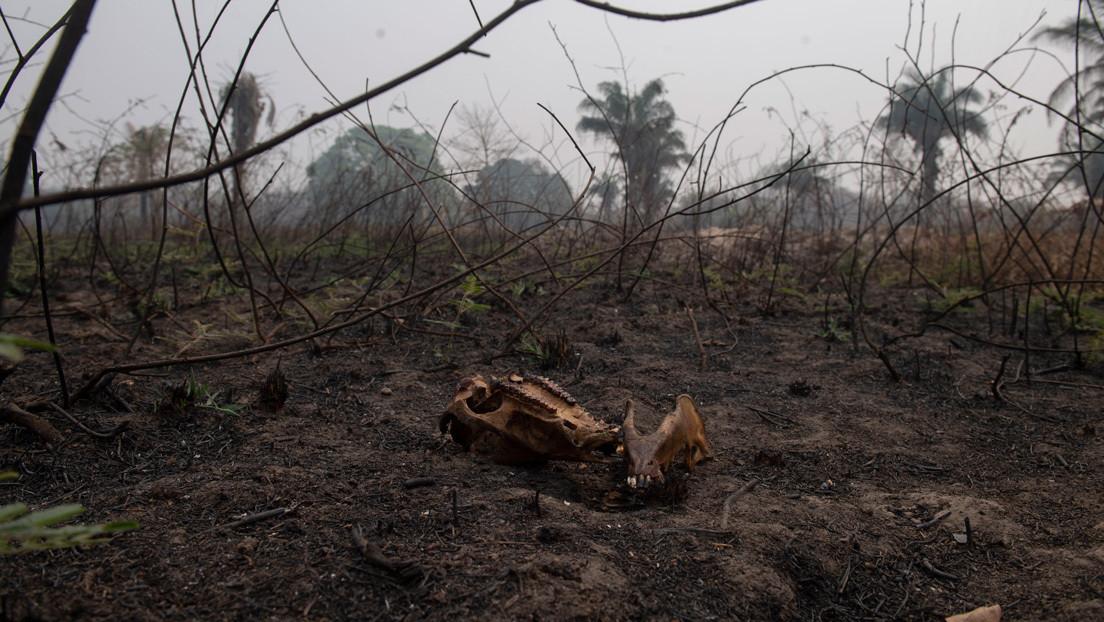 Un 14 % del bioma del Pantanal fue devorado por las llamas solo en el mes de septiembre