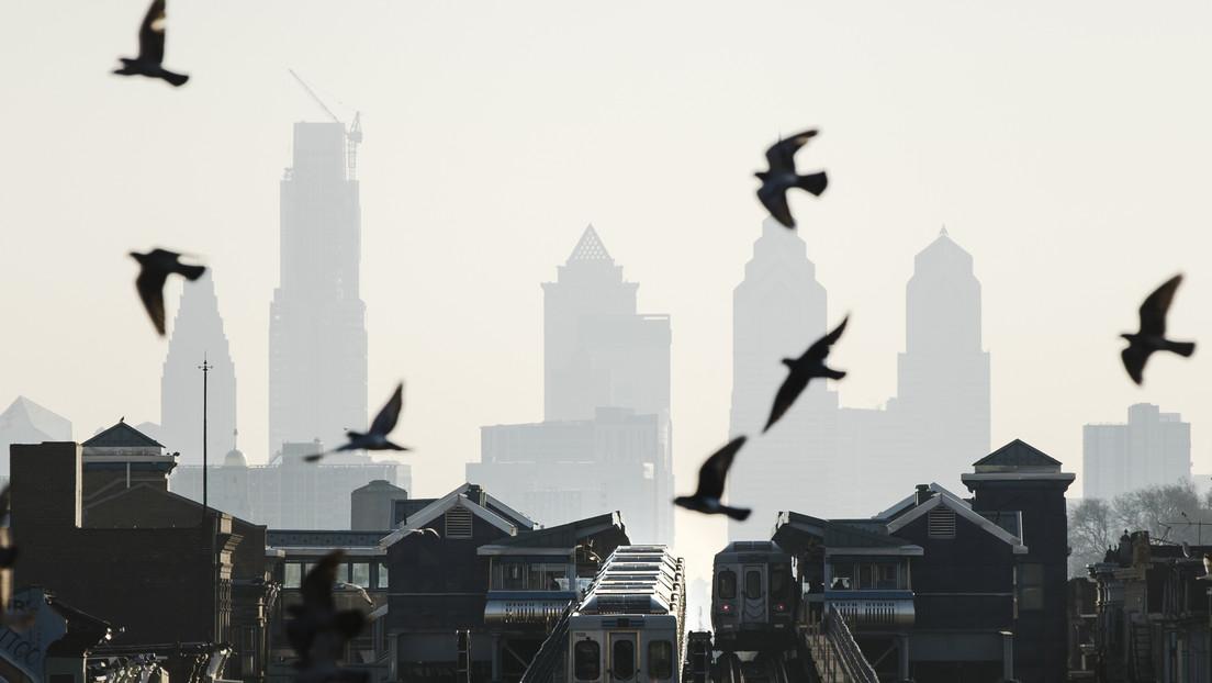 Hallan más de 1.000 pájaros muertos en las calles de Filadelfia tras chocar con rascacielos