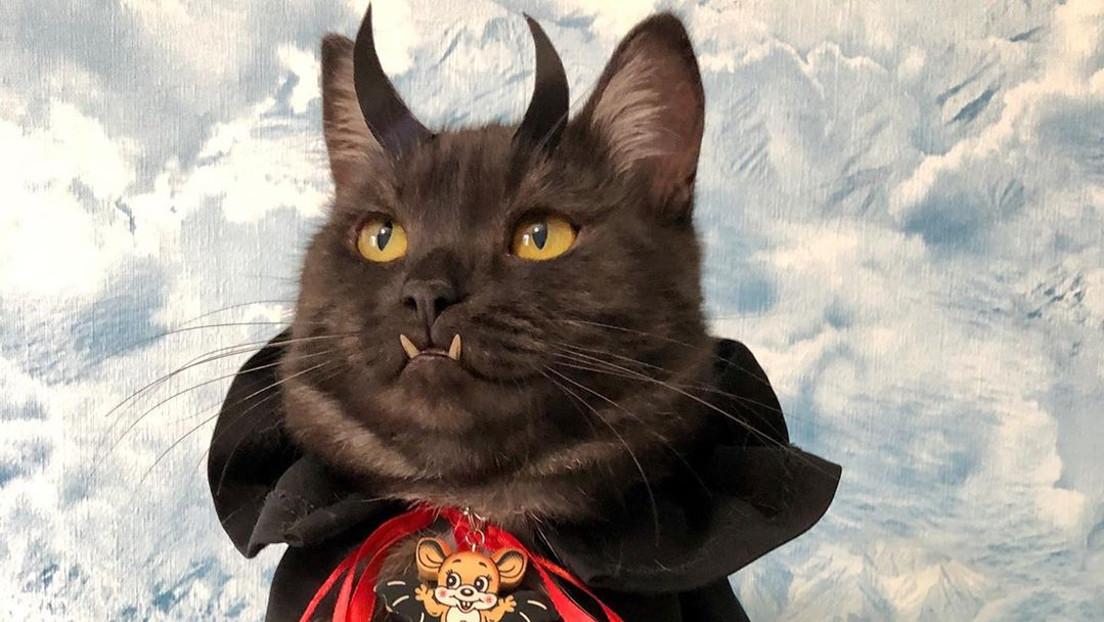 FOTOS: Un gato 'vampírico' ayuda a vender libros para apoyar a las mascotas sin hogar