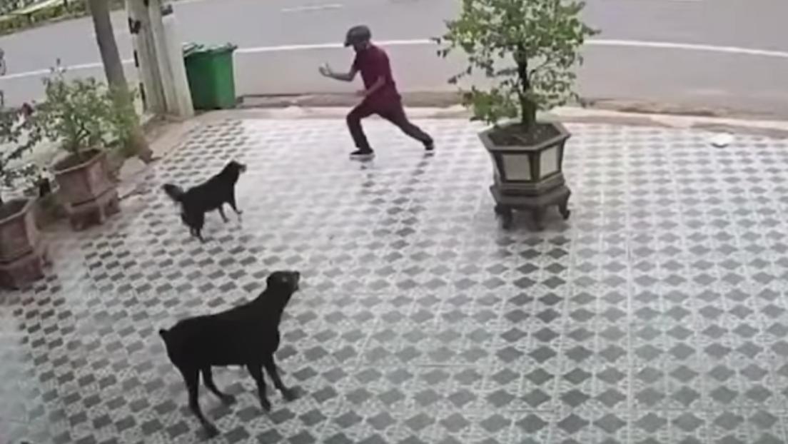 VIDEO: Se salva del ataque de unos perros por imitar al señor Miyagi de 'Karate Kid'