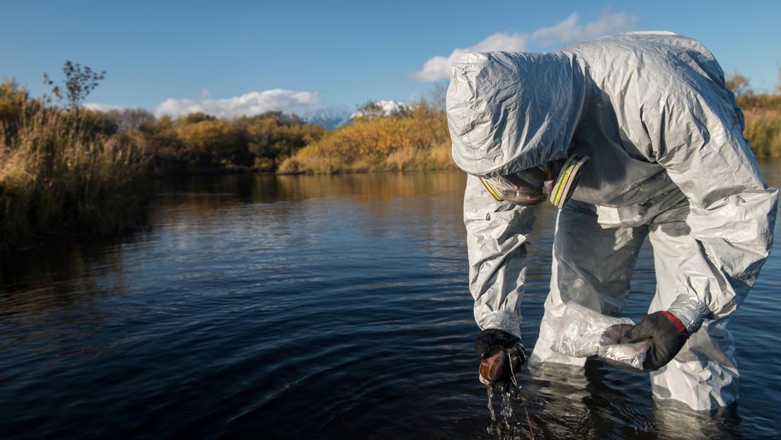"""""""Es un fenómeno a gran escala que la ciencia aún no ha entendido"""": detectan nuevas zonas de muerte de animales marinos en la costa de Kamchatka"""