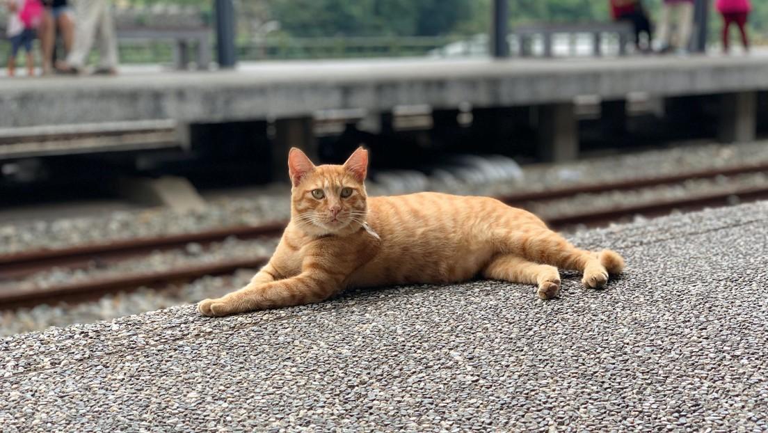 VIDEO: Retiran a un gato 'polizón' de un tren por viajar sin boleto