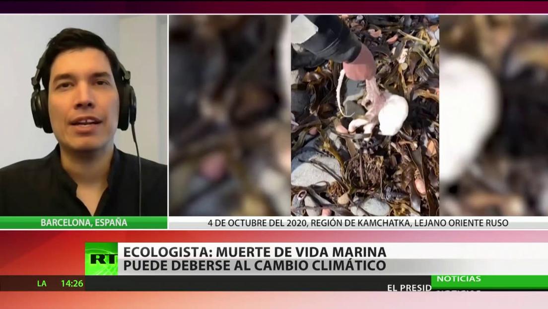 """Ecologista: La muerte de animales en Kamchatka puede ser un """"efecto del cambio climático"""""""