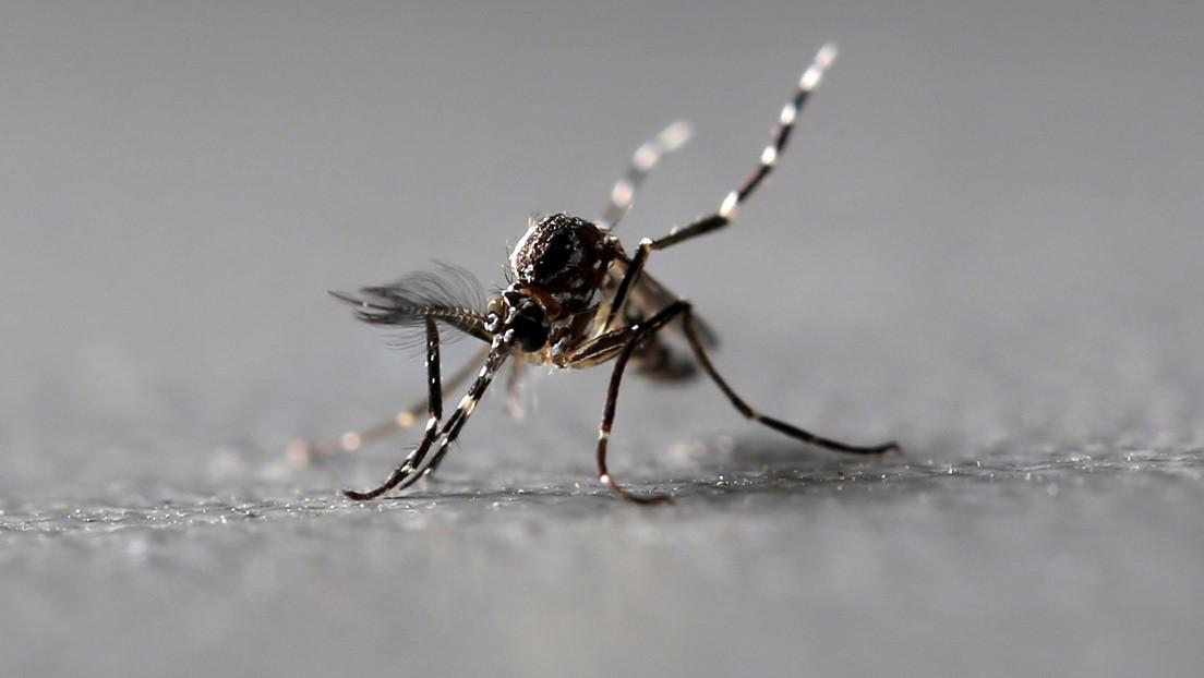 Descubren qué hace la sangre humana tan deliciosa para los mosquitos