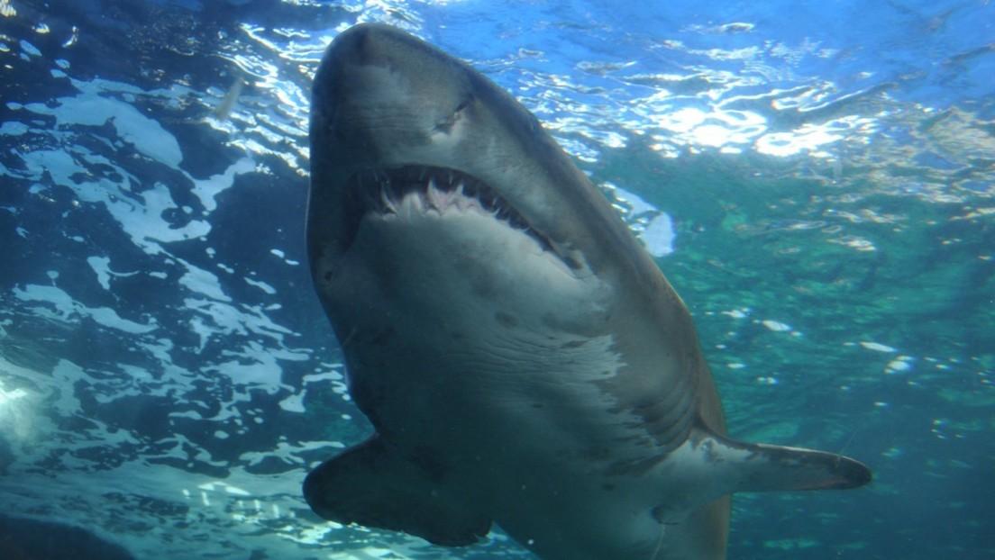 """VIDEO: Un turista es atacado por un tiburón que le arrancó un """"gran trozo"""" de pierna"""