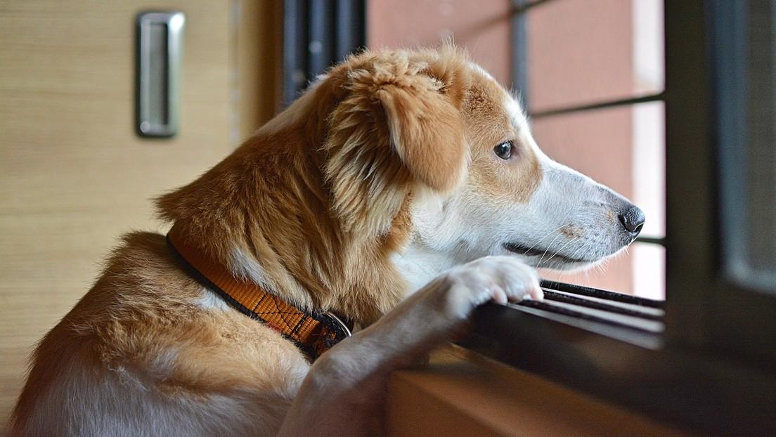 Los perros también atraviesan una crisis cuando llegan a la mediana edad