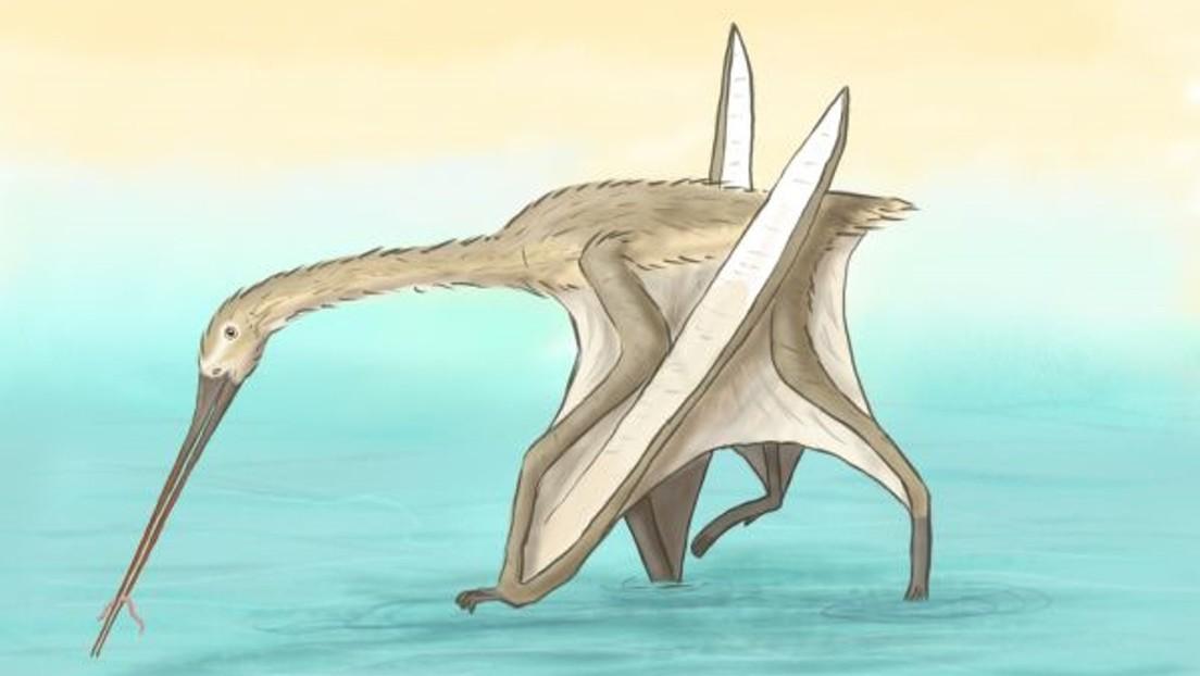 Descubren una nueva especie de reptil volador prehistórico de pico largo, delgado y sin dientes