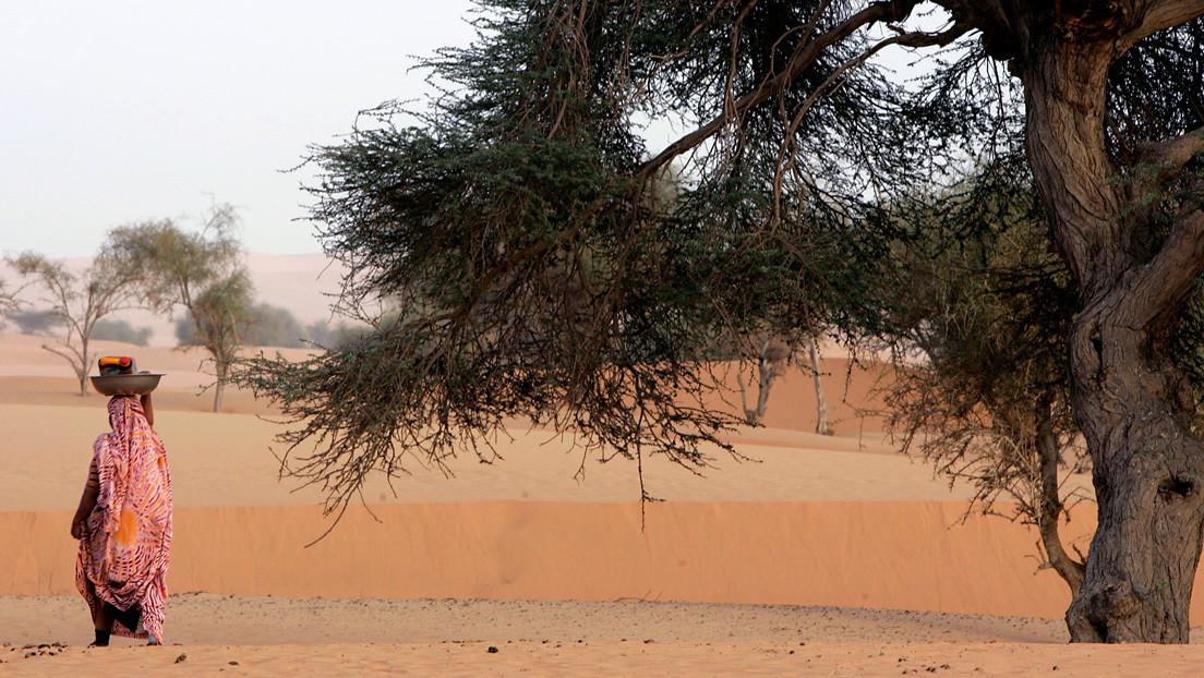 Científicos contaron uno por uno los árboles de los desiertos de Sahara y Sahel y el resultado fue sorprendente