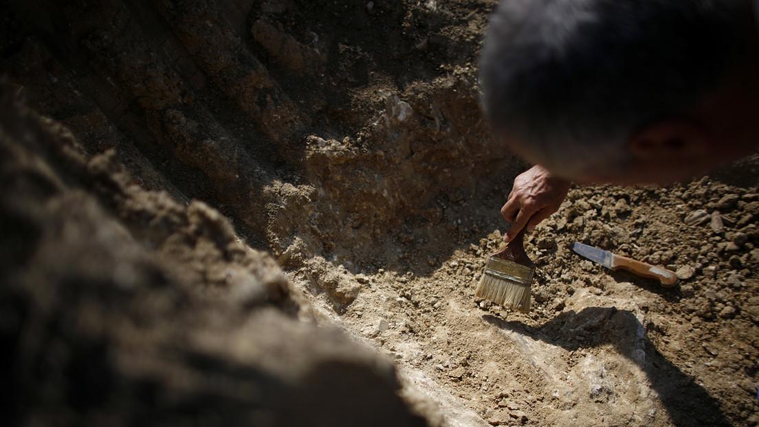 Niño encuentra un raro fósil de dinosaurio con pico de pato de 69 millones de años (FOTO)