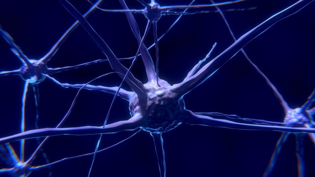 """Los científicos confirman que los hombres tienen cerebros más grandes """"variable"""" que las mujeres"""