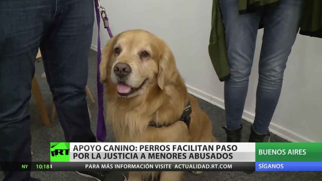 Apoyo canino: la Justicia argentina recurre a perros para facilitar el proceso judicial para menores abusados