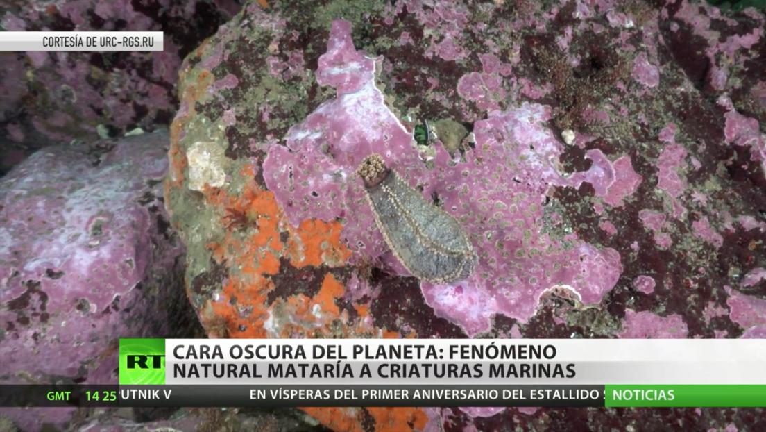 Cara oscura del planeta: La muerte masiva de fauna marina en Kamchatka se debió a un fenómeno natural