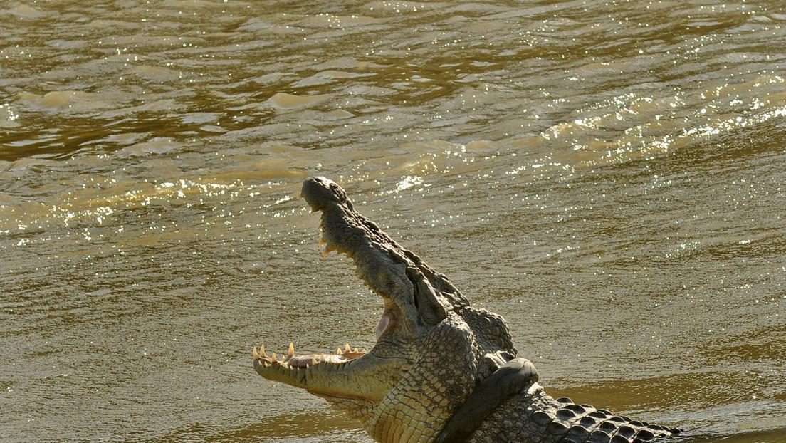 Un enorme cocodrilo persigue a un perro en el agua ante la impotente mirada de su amo (VIDEO)