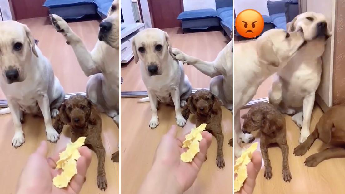 El video de un perro que delata a su 'amigo' con la pata arrasa en TikTok con más de 25 millones de reproducciones