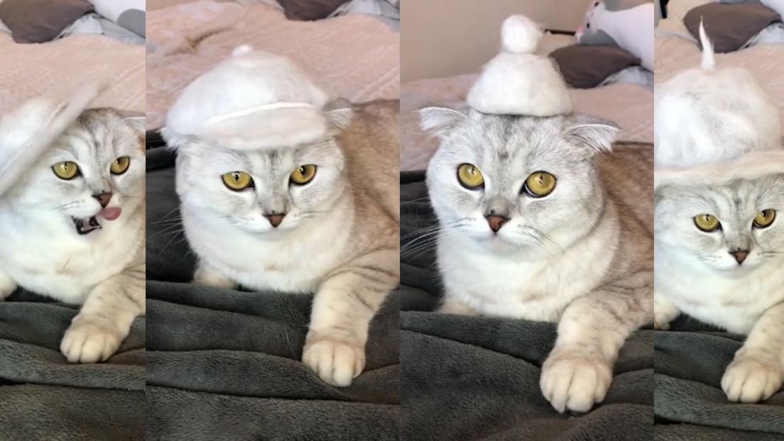 ¿Su gato pierde mucho pelo? Una 'tiktoker' hace sombreros con el pelaje de su felina y arrasa en las redes